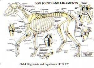 Can Dogs Have Rib Bones