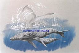 Humpback Song - Drawing by Cindy Farmer