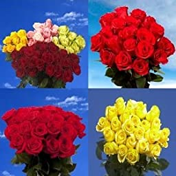 Fresh Cut 50 Red and 50 Assorted Roses | 100 Roses