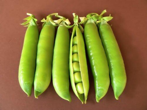 Wrinkled Pea 'Lincoln' (Pissum Sativum L.) Vegetable Plant Seeds, Medium Early, Sweet Heirloom 10G (0.35Oz)