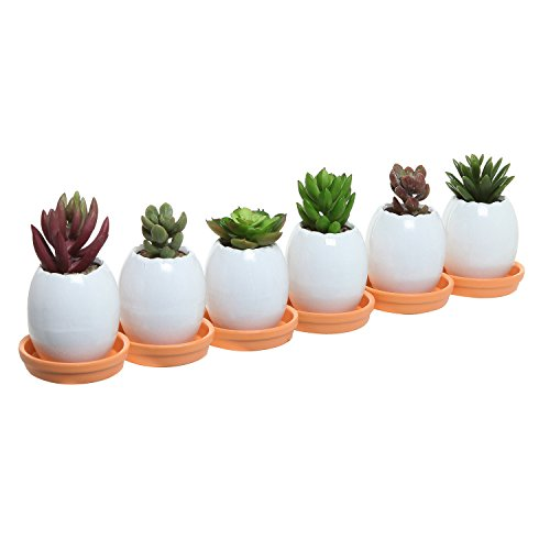 Set of 6 Mini White Egg Shell Shaped Decorative Ceramic Succulent Plant Pots w/ Orange Saucers - MyGift®