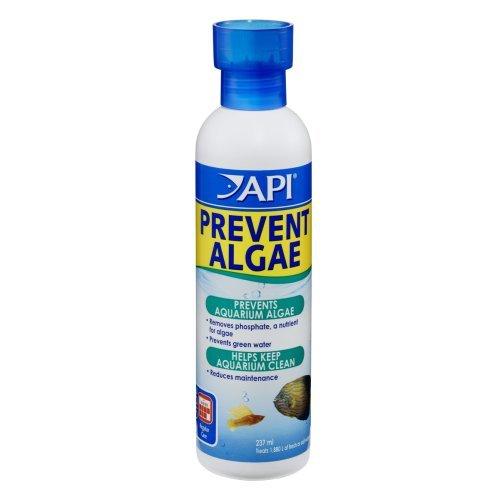 Api-Prevent-Algae-237Ml