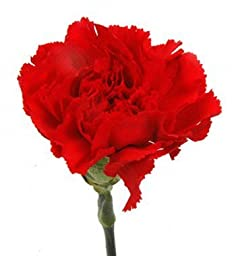 Cut Flowers - Red Carnations