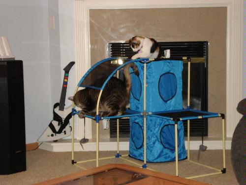 Pet Supplies : Pet Toys : Multi Cat Jungle Gym - Large : Amazon.com