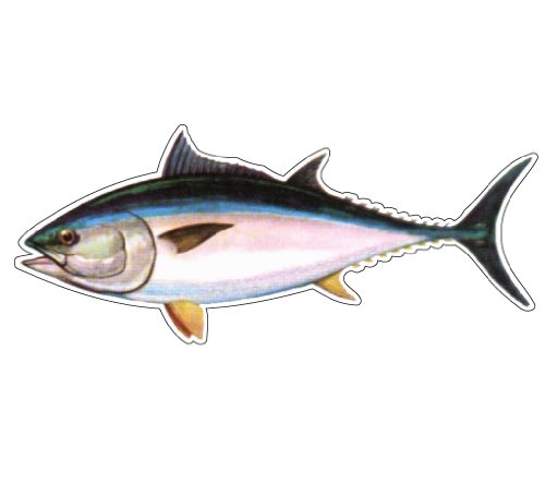 TUNA -Fish Decal- window sticker truck fishing deep sea (Fishing Fish Fisher Decal compare prices)