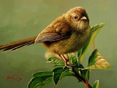 The High Quality Polyster Canvas Of Oil Painting 'a Brown Bird' ,size: 16x21 Inch / 41x54 Cm ,this Replica Art DecorativeCanvas Prints Is Fit For Gift For Girl Friend And Boy Friend And Home Decoration And Gifts