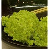 宮城県名物 新鮮な枝豆使用! ずんだもち 10個入り