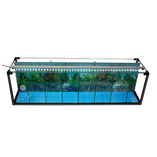 Komplettset aquarium zucht becken betta 38 l garnelen for Kampffisch zucht