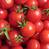 JayseedsTM Organic Cherry Tomato Sugar Sweetie 50 Seeds #992 Item Upc#650348691486