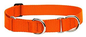 Lupine 1-Inch Blaze Orange 15-22-Inch Martingale Combo Collar for Large Dogs
