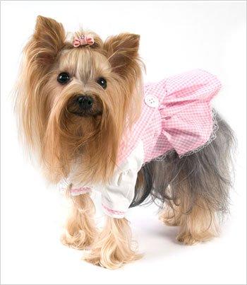 Dorothy Dress (Oz)