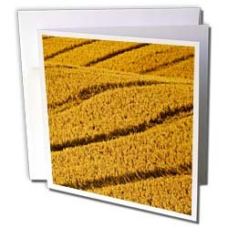 Danita Delimont - Agriculture - Wheat field agriculture, Kalispell Montana - US27 CHA1162 - Chuck Haney - Greeting Cards-12 Greeting Cards with envelopes