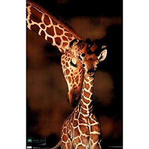 (22x34) Planet Earth Giraffe Mother and Baby Art Print Poster
