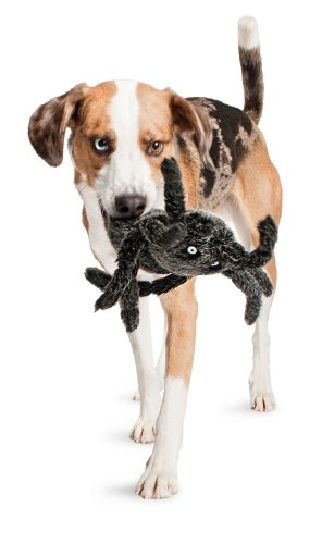 Petsafe Pogo Plush® Spider Dog Toy, Large