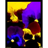 Dance Of Colours 01 Canvas Medium ( 32 In X 41 In )