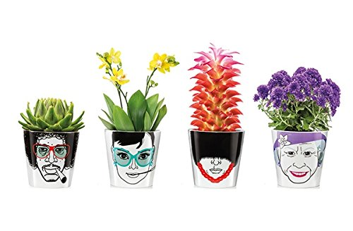 Donkey Porzellan-Blumentopf, Herbal Jimmy Klein, Flower Power 210766