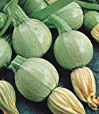 Premier Seeds Direct COU07 Italian Courgette Tondo Chiaro Di Nizza Seeds (Pack of 25)
