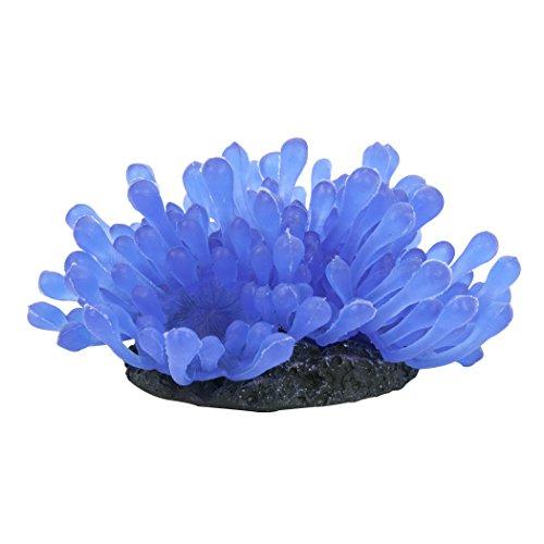 Tetra 26649 Wonderland Collection Blue Anemone