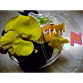 フレッシュ エディブルフラワー(食用花) 1パック