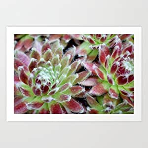 Amazon.com: Society6 - Purple Succulent Wall Poster / Art Print by