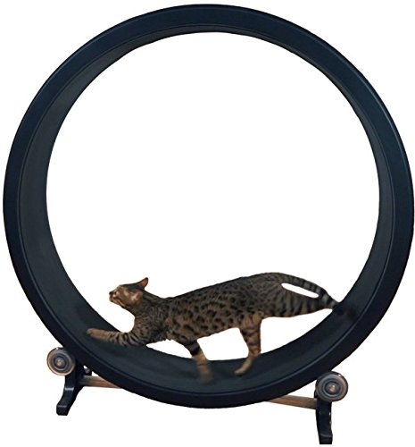 Cat Exercise Wheel