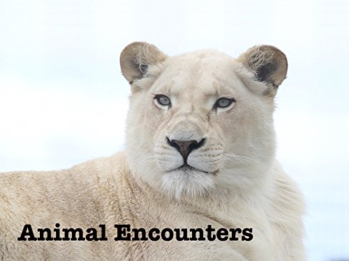 Animal Encounters