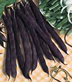 DWARF FRENCH BEAN - PURPLE QUEEN - 150 ITALIAN SEEDS
