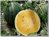 熊本県植木町産 希少サマーオレンジ(黄色品種すいか) 2L 7kg 1玉 吉永農園