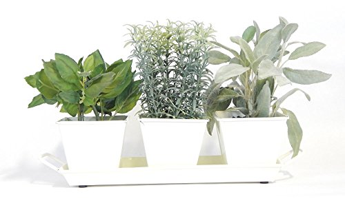 Windowsill Herb Garden Kit (Cream White) - Metal Planters, 5 Herbs, Soil and Labels (Herb Garden Window compare prices)