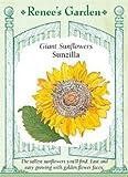 Sunflower, Sunzilla Giant