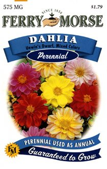Ferry-Morse 1042 Dahlia Perennial Flower Seeds, Unwin's Dwarf Mixed Colors (575 Milligram Packet)