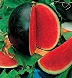 100 SUGAR BABY WATERMELON Citrullus lanatus Fruit Melon Seeds