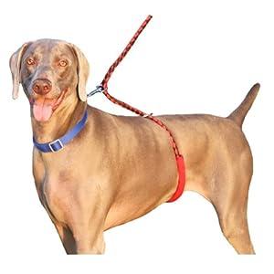 Best Anti Pull Dog Collar