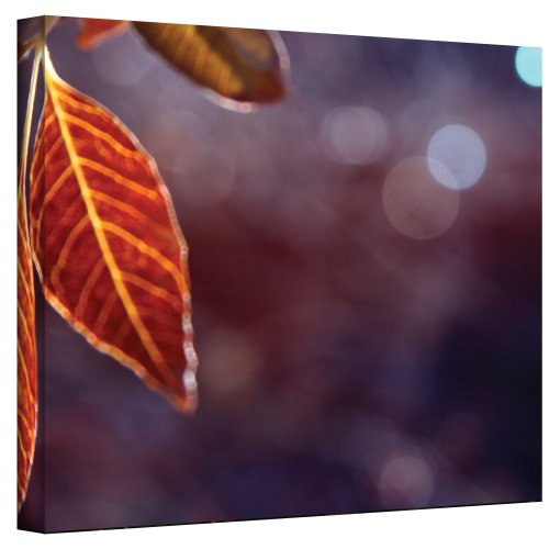 Art Wall Fall Lights Wrapped Canvas Art by Mark Ross, 24 by 32-Inch