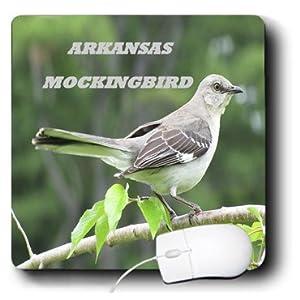 Amazon.com: Florene State Birds - Arkansas State Bird Northern