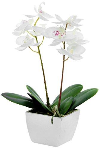 country-baskets-orchidea-artificiale-mini-in-vaso-color-panna