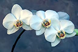 Startonight Wall Art Canvas Daydream Orchid Flower, Flowers USA Design for Home Decor, Dual View Surprise Artwork Modern Framed Ready to Hang Wall Art 23.62 X 35.43 Inch 100% Original Art Painting!