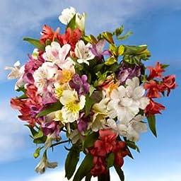 Beautiful Assorted Select Alstroemeria Flowers | 80 Alstroemeria Select