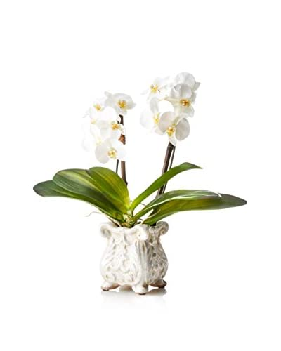 New Growth Designs Small Phalaenopsis Orchids in French-Style Glazed Pot