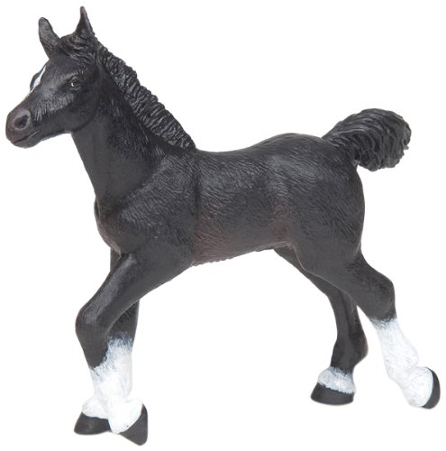 Black Anglo Arab Foal