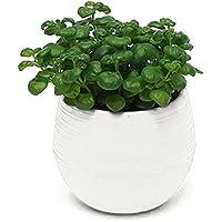 Mini Round Plastic Plant Flower Pots Home Garden Office Desk Decor Planter 7CM