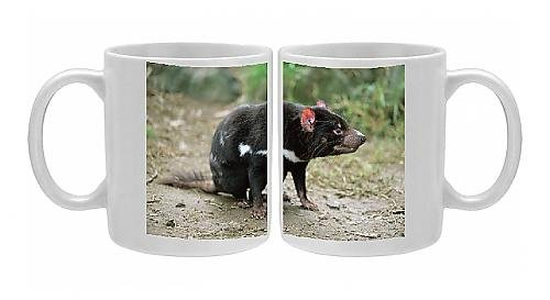 Photo Mug of Tasmanian devil, Sarcophilus harrisii, in captivity, Australia, Pacific