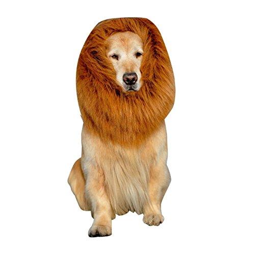 Pet D (Cat Lion Halloween Costumes)