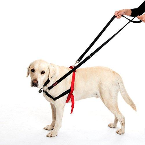 Halti Dog Training Lead Instructions