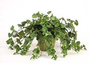 Silk Hedera Ivy Desk Top Plant in Pot Set of 2