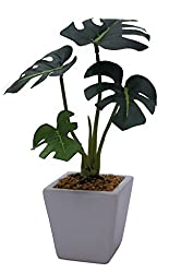 Fourwalls Premium Range Mini Artificial Philodendron Plant with Stylish Ceramic Vase (ABT22CMPHILODENDRON/1225/A)