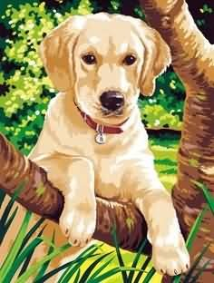Reeves - Junior Paint By Numbers Labrador