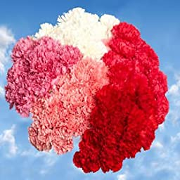350 Carnations Mother\'s Day Carnation Flowers Wholesale