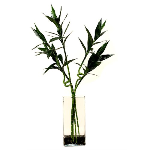Faux Lucky Bamboo in Glass Vase - Green
