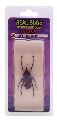 DeAgostini Real Bugs Red Palm Weevil Bug - 1